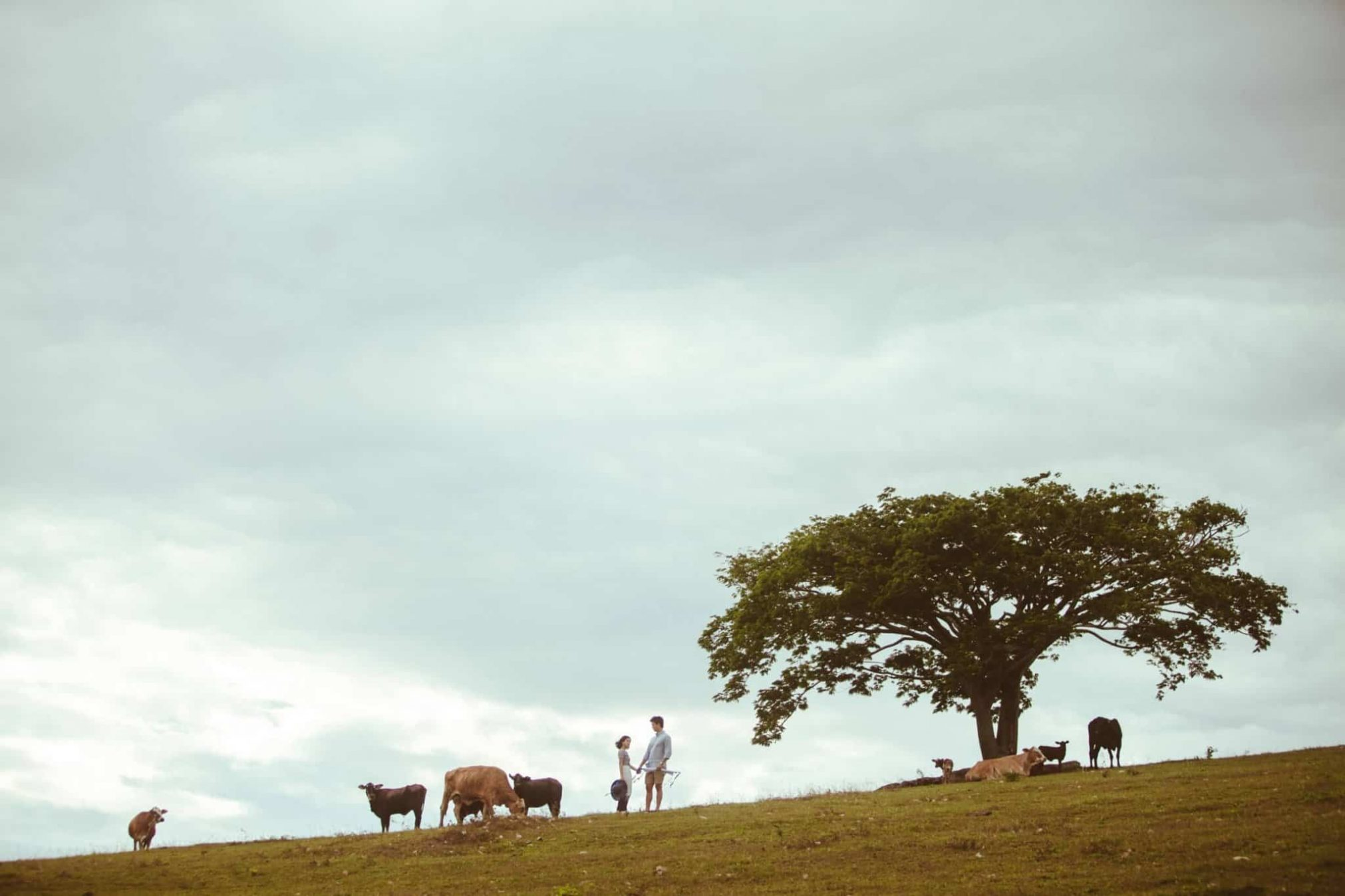 Malaysia based destination wedding photographer kuala lumpur prewedding cows big green tree couple